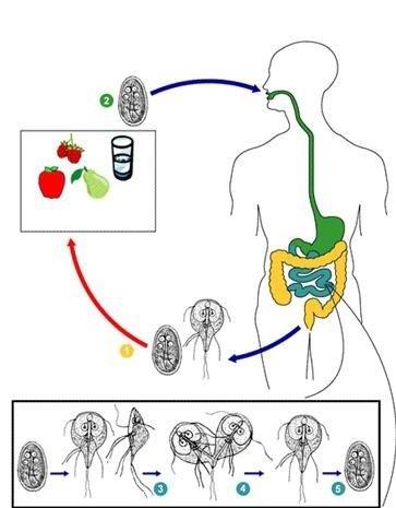 ЗАРАЖЕНИЯ - Очищение организма от паразитов БАДами NSP