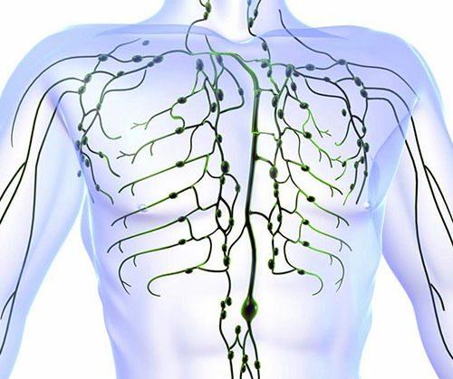 limfaticheskaia-sistema