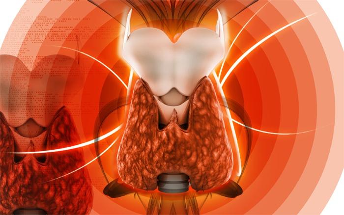 041267c62fe34db18b848de36c963a61 - Щитовидная железа