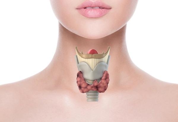 Thyroid 2 - Щитовидная железа