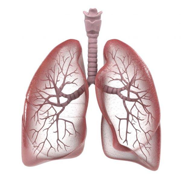 человека - «Здоровье  дыхательной  системы» конспект лекции врача-нутрициолога Шабановой Н.Ю.