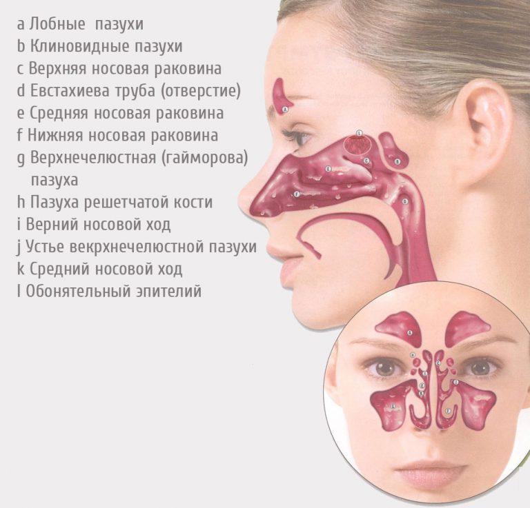.jpg - «Здоровье  дыхательной  системы» конспект лекции врача-нутрициолога Шабановой Н.Ю.